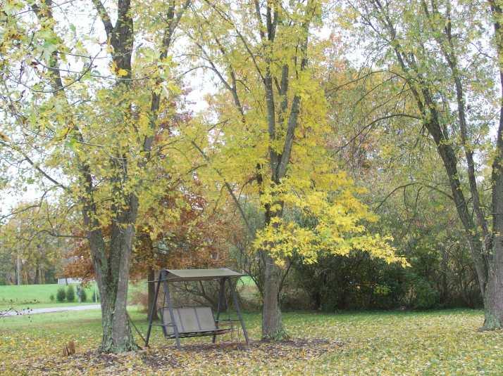 fall 2013 001