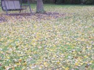 fall 2013 002