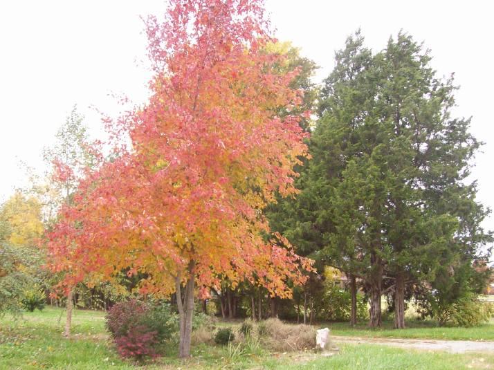 fall 2013 010